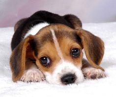 Supah Cute!!!