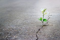 flower-in-crack-12x8.jpg (800×533)