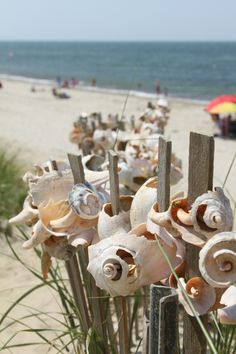 do this in the backyard!!! like white painted or natural driftwood finish sticks with broken seashells stuck on them or seashells with holes