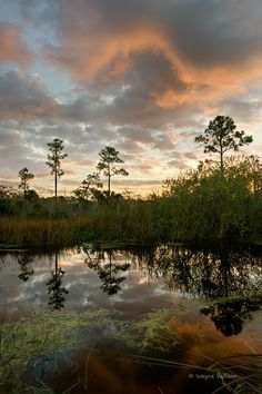 Morning in the Florida Everglades