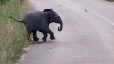 Cuteness overload! Watch this baby elephant chase a group of birds