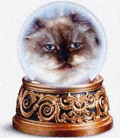 snow globe cat