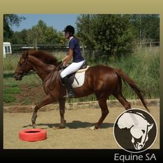 Horses For Sale, over 50 Breeds, 30 Disciplines/Sports, Stud Farms, Stallion Services Stud Farm, Horses For Sale, Thoroughbred, South Africa, Animals, Animales, Animaux, Animal, Animais