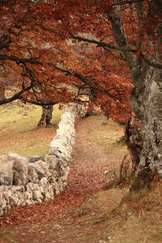 Amazing Stone Fence in Autumn Field. Reminds me of our time living in Massachusetts