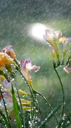 Spring rain - So refreshing :-)