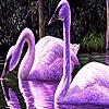 Roxos cisnes, o quebra-cabeça do lago - http://www.jogarjogosonlinegratis.com.br/jogos-de-sobrevivencia/roxos-cisnes-o-quebra-cabeca-do-lago/