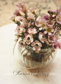 Sugar Wax Flower