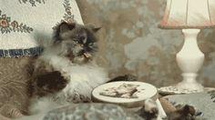 Cat doing needlepoint - animated gif.
