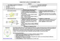 fiche technique: DISSECTION FLORALE et DIAGRAMME FLORAL