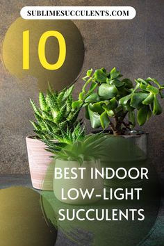 Check out our compilation for the best low-light succulents for indoor gardening. Here are your options for easy and low-maintenance plants that are perfect to keep indoors. Find your options on this pin! Succulent Care, Succulent Gardening, Greenhouse Gardening, Container Gardening, Indoor Gardening, Texas Gardening, Potager Garden, Garden Bed, Low Light Succulents