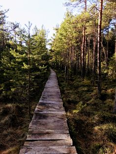This man-made non invasive path along the Peat land of Poiana Stampei is a memorable walk as you stroll around in the pine forest. Turism Romania, Visit Romania, Pine Forest, Bridges, Trip Planning, Montana, Places To See, Paths, The Good Place