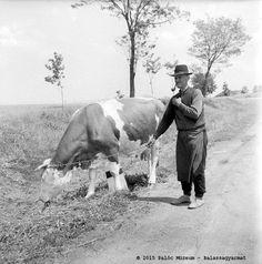 Farm Photo, Old Photography, Vintage Farm, Bratislava, Farm Life, Old Photos, Farming, Folk Art, The Past