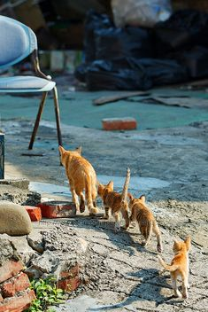 Cats. Following mama <3