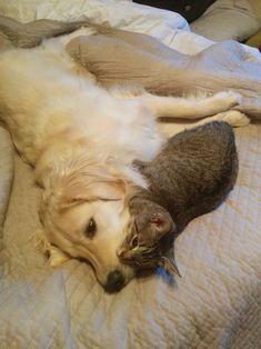 猫と犬の仲良し画像 23|ねこLatte+