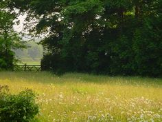 Wild flower meadow - I love the dark against the light of the field.
