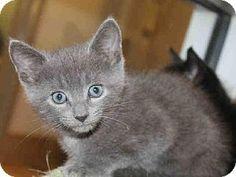Meow! My name is VAN