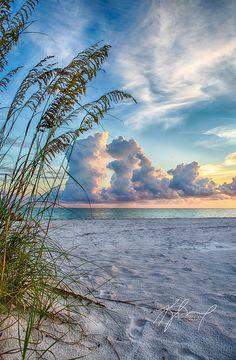 Seaoat sunrise, a summer thunderhead over North Lido Beach, Sarasota, Florida | Kyle Miller on 500px