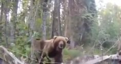 """""""Hey Bear, Get Outta Here"""": Alaskan Grizzly Bear Almost Gets in Hunter's Blind Bear Hunting, Hunting Tips, Pumping, Brown Bear, Blinds, Wildlife, Pictures, Animals, Shutters"""