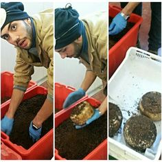 Il nostro Francesco intento a liberare il #pecorino #Gineprino dalle bacche di ginepro che durante la stagionatura gli hanno donato un sapore inconfondibile!