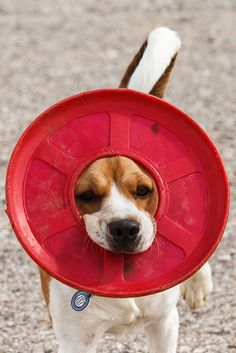 Frisbee Crown by Don Burkett