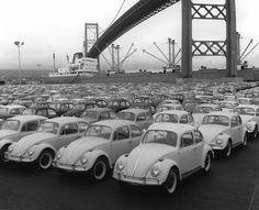 imported VW Beetles, Los Angeles Harbor and Vincent Thomas Bridge