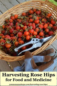 Tips for harvesting rose hips and how to use them. The hips have tiny hairs that can cause irritation if you don't process them correctly, so prep wisely! Natural Health Remedies, Herbal Remedies, Rose Hip Jelly, Rosehip Tea, Dried Berries, Edible Plants, Edible Flowers, Edible Garden, Healing Herbs