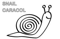 Snail coloring. Pintar caracol. Para descargar ir a: http://dibujos-para-colorear.euroresidentes.com/2013/03/pintar-caracoles.html