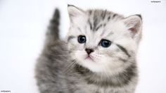 Sweet Cats Wallpapers