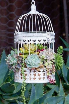 and Admire These Charming Succulent Birdcages — Then DIY Them! Stop and Admire These Charming Succulent Birdcages — Then DIY Them!Bird cage (disambiguation) A birdcage is a cage for birds. Bird cage or variants may also refer to: Succulents In Containers, Cacti And Succulents, Container Plants, Planting Succulents, Container Gardening, Cactus Plants, Succulents Drawing, Pot Plants, Fake Plants