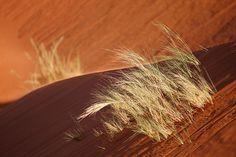 Leben in der Wüste #wallpaper #Africa