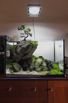 Interesting tank idea. #aquarium #fish #tank