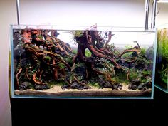 Favourites: new tank by Xiaozhuang Wong‎ A stunning hardscape with lots of interesting details. Let's wait to see how the plants grow and surely this will be an amazing scape!