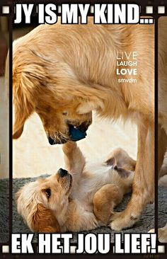 maman chien et son chiot - Animals Dogs & Cats /HUNDE & Katzen - Baby Dogs, Pet Dogs, Dog Cat, Doggies, Pet Pet, Cute Baby Animals, Funny Animals, Funny Cats, Wild Animals