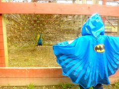 Dad Took His Son Wearing A Batman Jacket To A Zoo – This Peacock Took It As A Challenge