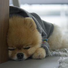sleepy Jiff
