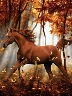 Forest Enchantment, A Heavenly Horses 300 Large Piece Jigsaw Puzzle By Lafayette Puzzle Factory Most Beautiful Animals, Beautiful Horses, Beautiful Creatures, Cute Horses, Horse Love, Horse Photos, Horse Pictures, Majestic Horse, All The Pretty Horses
