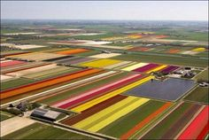 Isn't this awesome? Flower farms.