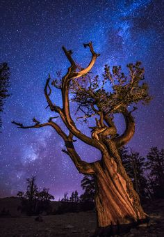 The Ancient Ones (Bristlecone pine, California) by Wayne Pinkston - 500px