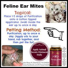 Essential Oils For Ear Mites Cats