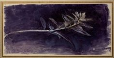 The Elements of Drawing I John Ruskin's teaching collection at Oxford Pre Raphaelite Brotherhood, John Everett Millais, John Ruskin, John William Waterhouse, William Blake, Plant Drawing, English Artists, Writing Styles, Italian Art