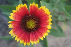 OBX wild flowers