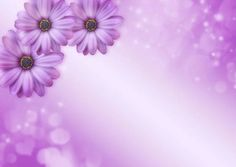 Free Image on Pixabay - Flowers, Bokeh, Sparkle, Purple Public Domain, Bokeh, Free Pictures, Free Images, Happy Birthday Messages, Graphic Illustration, Bloom, Sparkle, Instagram