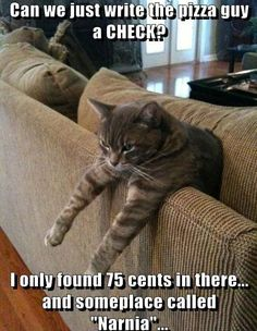 cat looking for change in couch