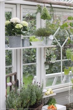 Greenhouse, old windows greenhouse, garden Garden Compost, Greenhouse Gardening, Container Gardening, Greenhouse Ideas, Hydroponic Plants, Hydroponics, Window Greenhouse, Glass Building, Potting Sheds