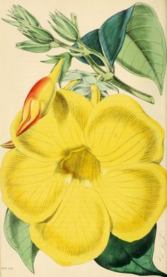 1869 - The florist and pomologist. - Biodiversity Heritage Library
