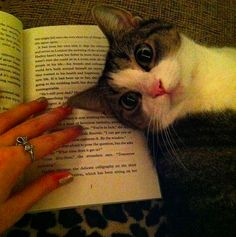 A cat, cleverly placing her head directly on the book page trying to be read.