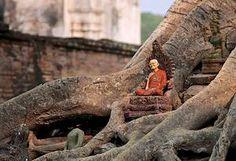 Sukhothai: giant buddhas or tiny ancestors @Gail Regan Truax://www.mariosgarrella.com/#!myanmar-malaysia-by-train/c1wry Train, Animals, Animales, Animaux, Zug, Animal Memes, Animal, Strollers, Animais