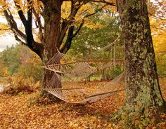 hammocks in the fall....perfection!