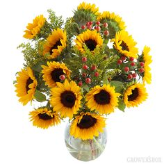 GrowersBox.com: Flowers: Sunflower Bouquet w/Vase  The perfect way to literally send a ray of sunshine to someone!
