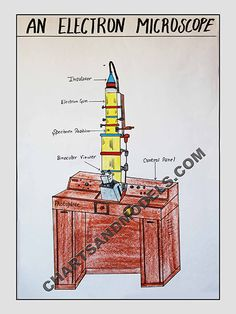 Buy Electron Microscope Charts Online In Delhi Buy Electron Microscope Charts Online for schools as well as students regarding their project.
